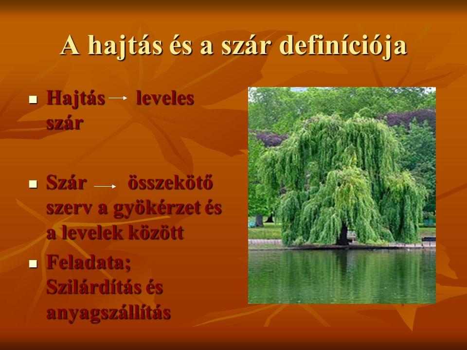 A hajtás és a szár definíciója Hajtás leveles szár Hajtás leveles szár Szár összekötő szerv a gyökérzet és a levelek között Szár összekötő szerv a gyö