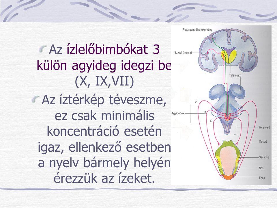 Az ízlelőbimbókat 3 külön agyideg idegzi be (X, IX,VII) Az íztérkép téveszme, ez csak minimális koncentráció esetén igaz, ellenkező esetben a nyelv bá