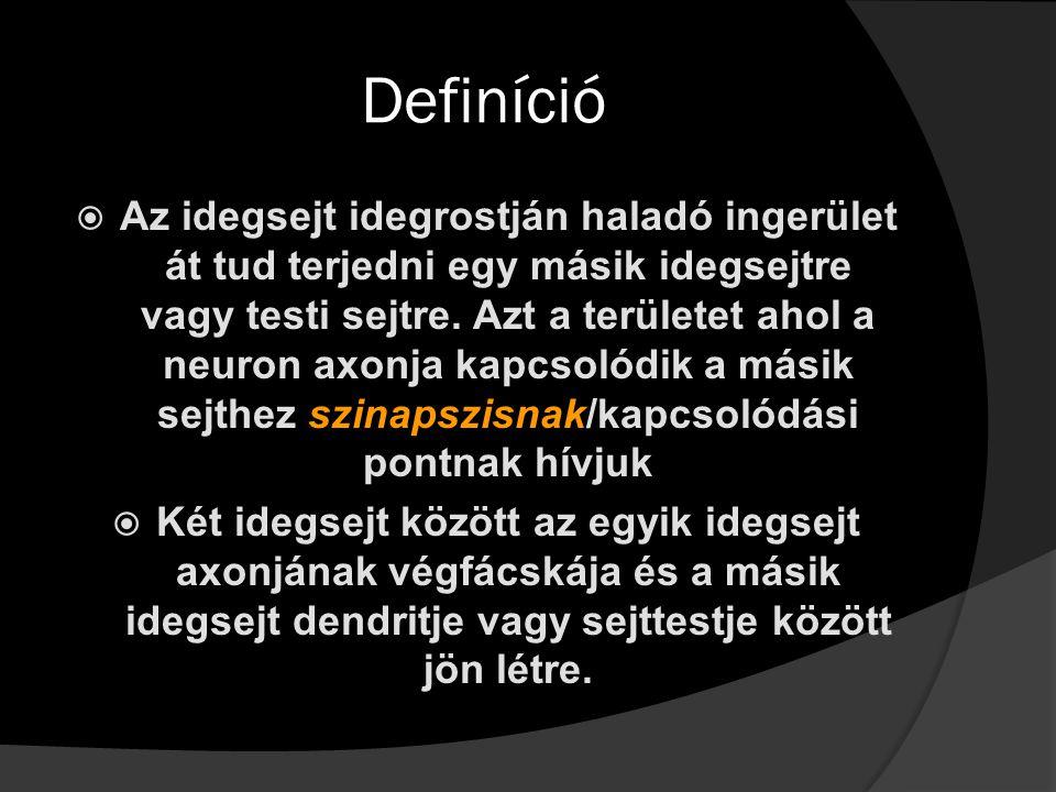 Definíció AAz idegsejt idegrostján haladó ingerület át tud terjedni egy másik idegsejtre vagy testi sejtre. Azt a területet ahol a neuron axonja kap