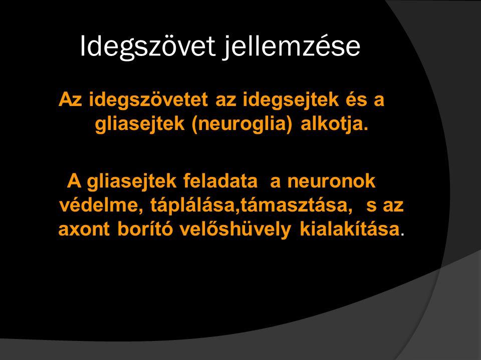 Idegszövet jellemzése Az idegszövetet az idegsejtek és a gliasejtek (neuroglia) alkotja. A gliasejtek feladata a neuronok védelme, táplálása,támasztás