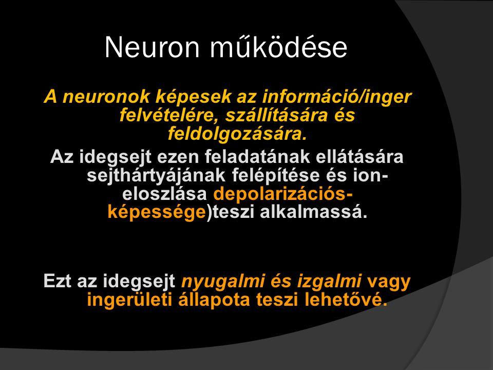 Neuron működése A neuronok képesek az információ/inger felvételére, szállítására és feldolgozására. Az idegsejt ezen feladatának ellátására sejthártyá