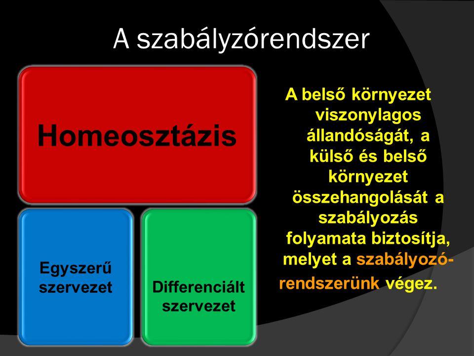 A szabályzórendszer Homeosztázis Egyszerű szervezetDifferenciált szervezet A belső környezet viszonylagos állandóságát, a külső és belső környezet öss