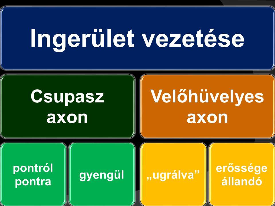 """Ingerület vezetése Csupasz axon pontról pontra gyengül Velőhüvelyes axon """"ugrálva"""" erőssége állandó"""