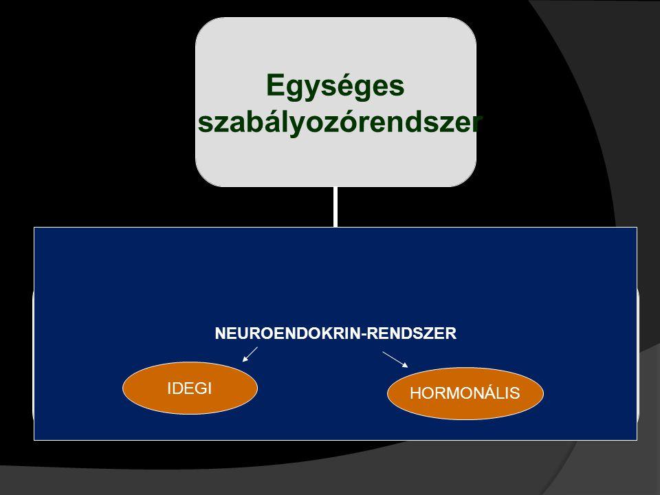 Egységes szabályozórendszer IdegrendszerHormonrendszer NEUROENDOKRIN-RENDSZER IDEGI HORMONÁLIS