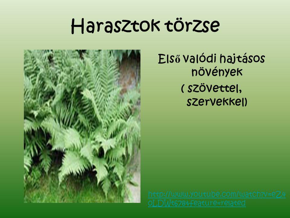 Harasztok törzse Els ő valódi hajtásos növények ( szövettel, szervekkel) http://www.youtube.com/watch?v=eZ4 0LDWt678&feature=related