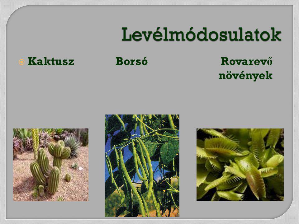  Kaktusz Borsó Rovarev ő növények