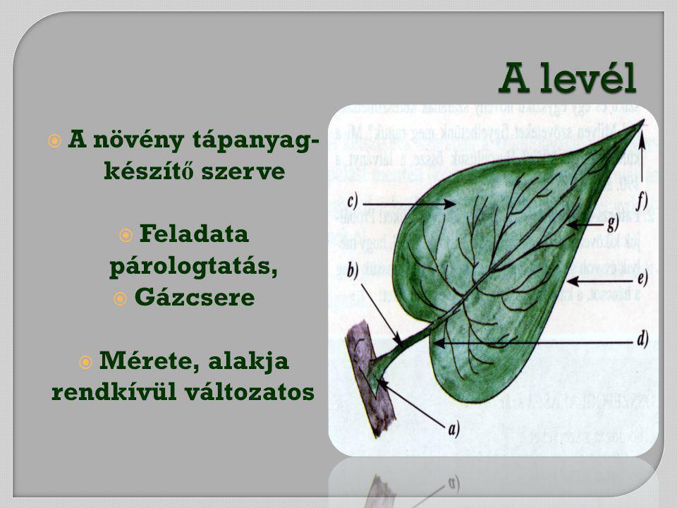  A növény tápanyag- készít ő szerve  Feladata párologtatás,  Gázcsere  Mérete, alakja rendkívül változatos