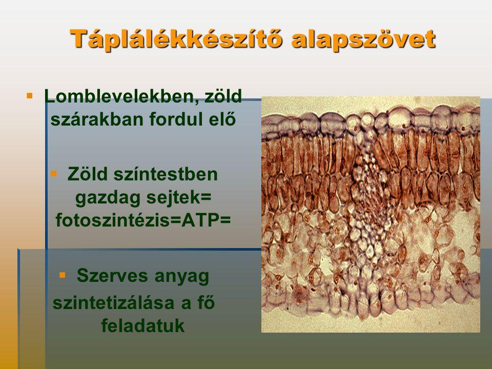 Táplálékkészítő alapszövet   Lomblevelekben, zöld szárakban fordul elő   Zöld színtestben gazdag sejtek= fotoszintézis=ATP=   Szerves anyag szintetizálása a fő feladatuk
