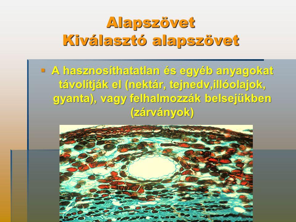Alapszövet Kiválasztó alapszövet  A hasznosíthatatlan és egyéb anyagokat távolítják el (nektár, tejnedv,illóolajok, gyanta), vagy felhalmozzák belsejükben (zárványok)