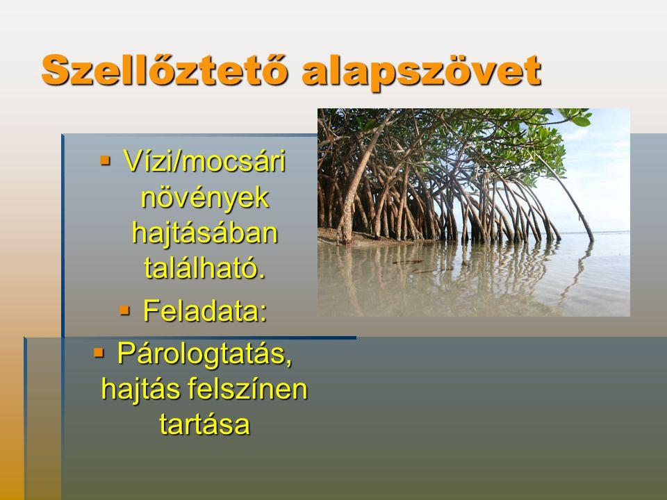 Szellőztető alapszövet  Vízi/mocsári növények hajtásában található.