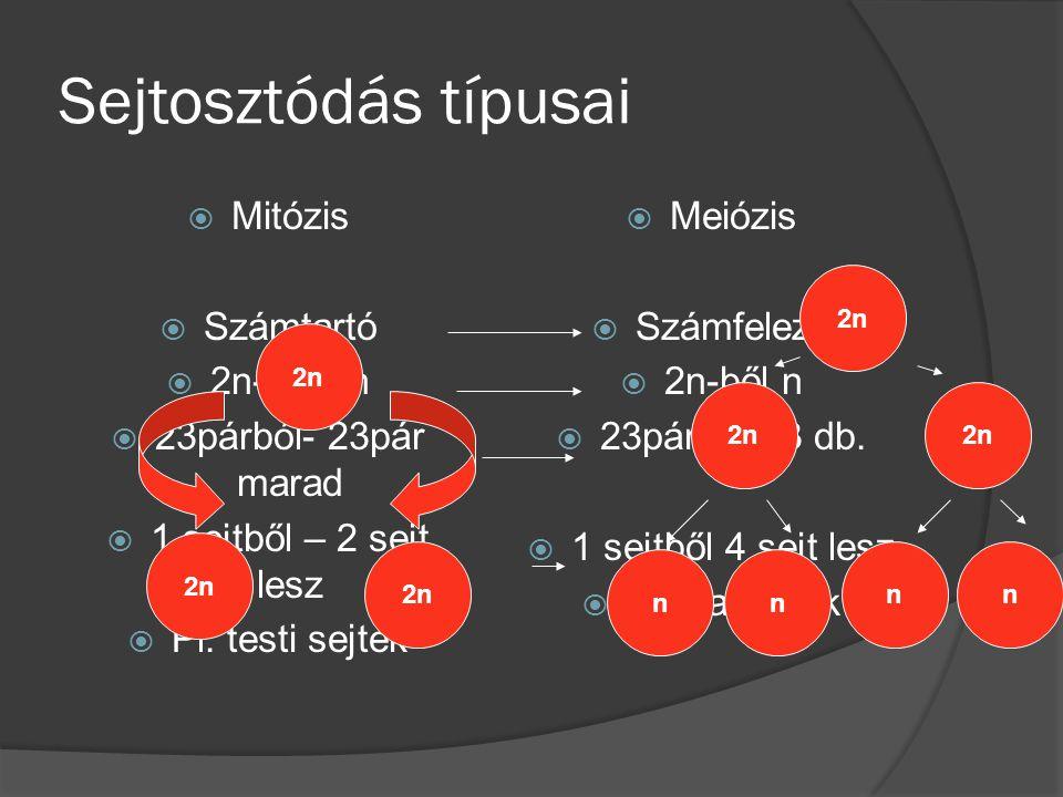 Sejtosztódás típusai  Mitózis  Számtartó  2n-ből 2n  23párból- 23pár marad  1 sejtből – 2 sejt lesz  Pl. testi sejtek  Meiózis  Számfelező  2