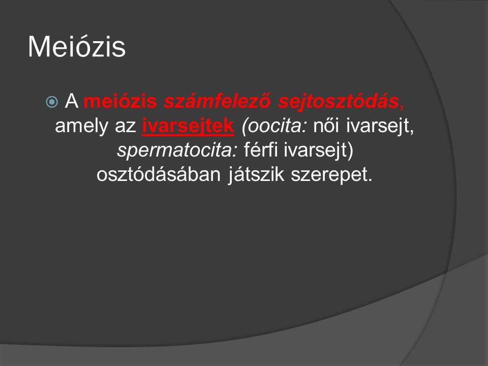 Meiózis  A meiózis számfelező sejtosztódás, amely az ivarsejtek (oocita: női ivarsejt, spermatocita: férfi ivarsejt) osztódásában játszik szerepet.