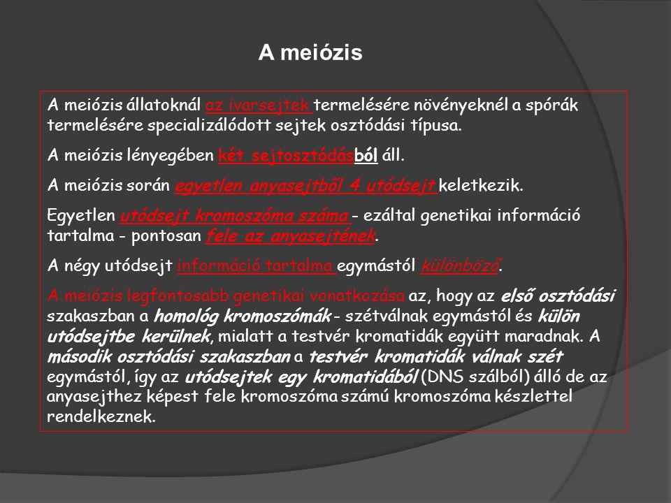 A meiózis állatoknál az ivarsejtek termelésére növényeknél a spórák termelésére specializálódott sejtek osztódási típusa. A meiózis lényegében két sej