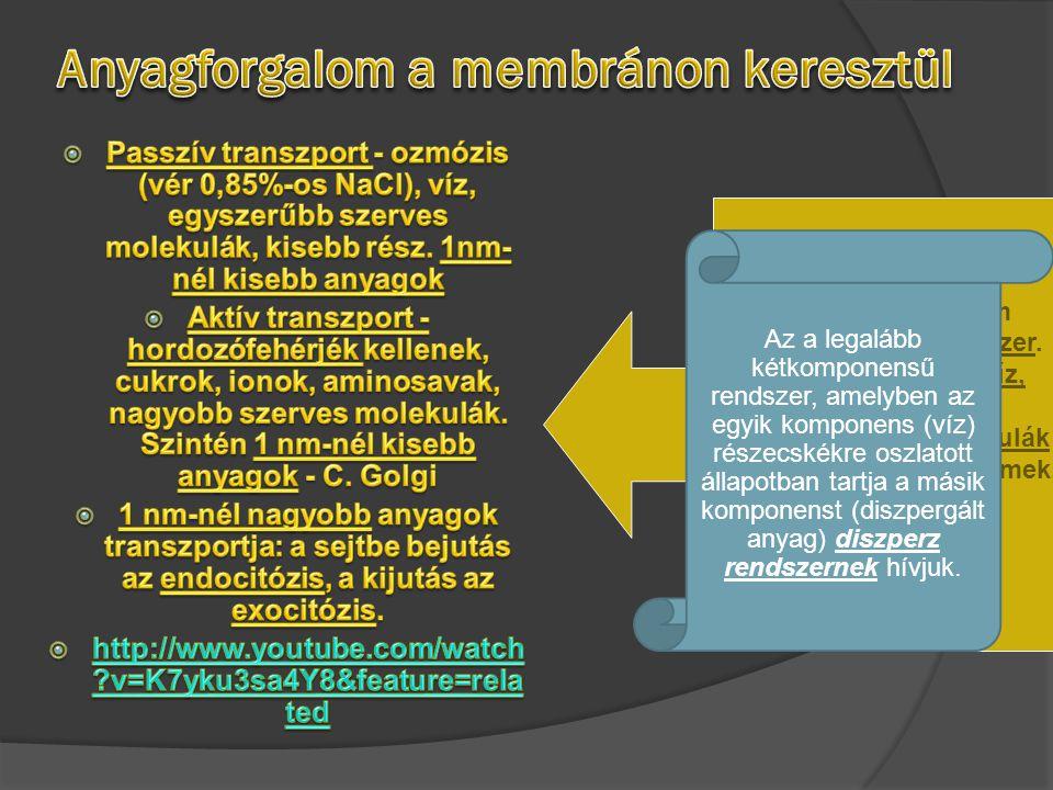 Mitózis metafázis  Osztódási orsó alakul ki. A kromoszómák az egyenlítői síkba rendeződnek.