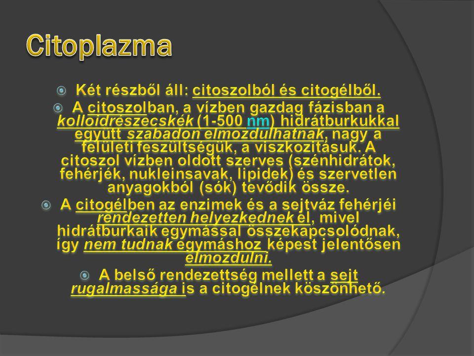 Sejtosztódás típusai  Mitózis  Számtartó  2n-ből 2n  23párból- 23pár marad  1 sejtből – 2 sejt lesz  Pl.