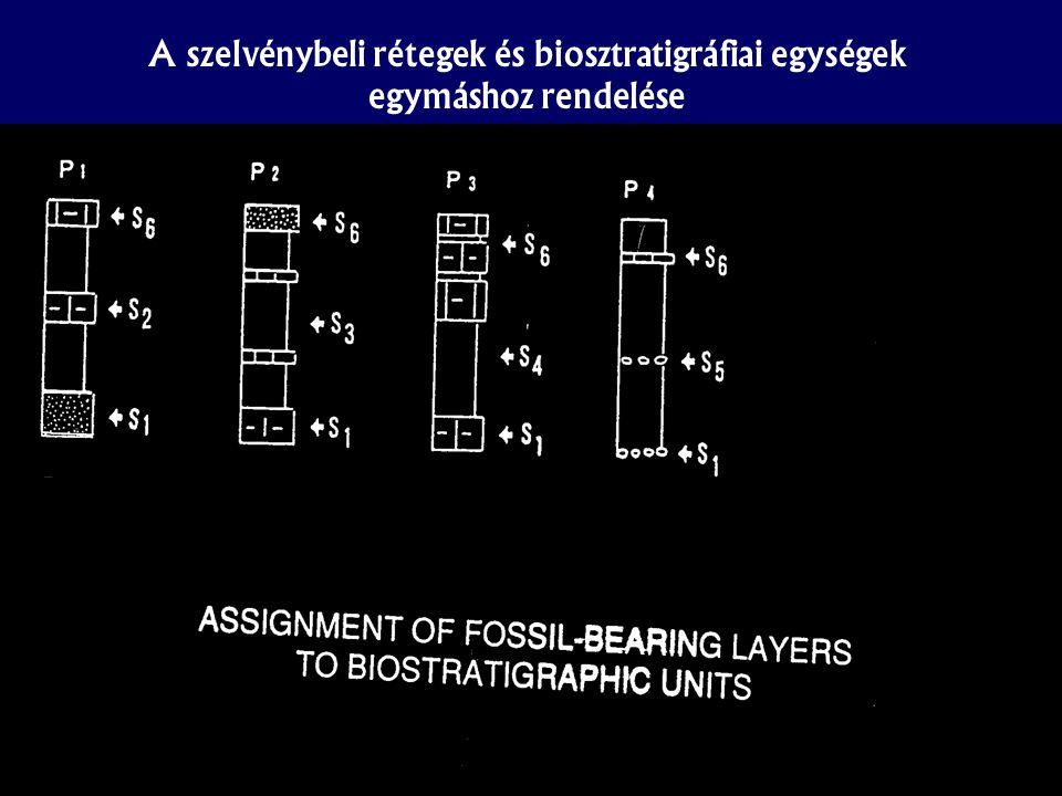 A szelvénybeli rétegek és biosztratigráfiai egységek egymáshoz rendelése