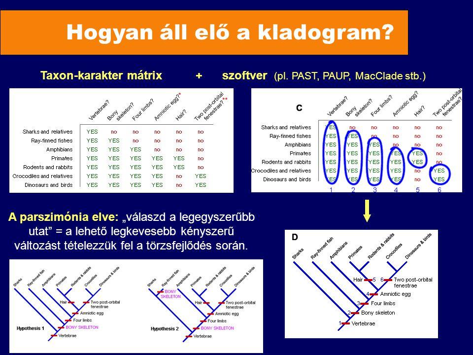 """Hogyan áll elő a kladogram? Taxon-karakter mátrix + szoftver (pl. PAST, PAUP, MacClade stb.) A parszimónia elve: """"válaszd a legegyszerűbb utat"""" = a le"""