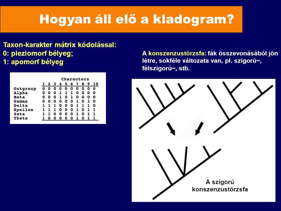 Hogyan áll elő a kladogram? A szigorú konszenzustörzsfa Taxon-karakter mátrix kódolással: 0: pleziomorf bélyeg; 1: apomorf bélyeg A konszenzustörzsfa: