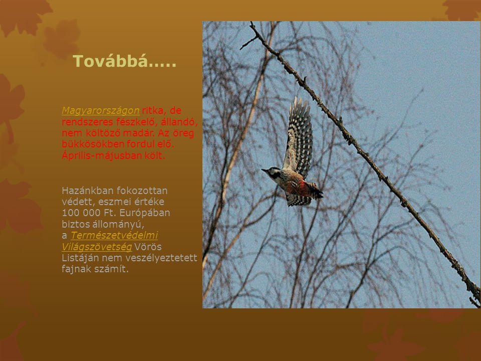 Továbbá….. MagyarországonMagyarországon ritka, de rendszeres fészkelő, állandó, nem költöző madár. Az öreg bükkösökben fordul elő. Április-májusban kö