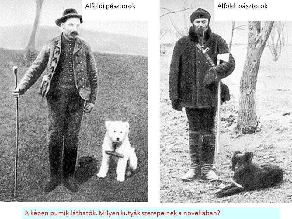 Alföldi pásztorok A képen pumik láthatók. Milyen kutyák szerepelnek a novellában?
