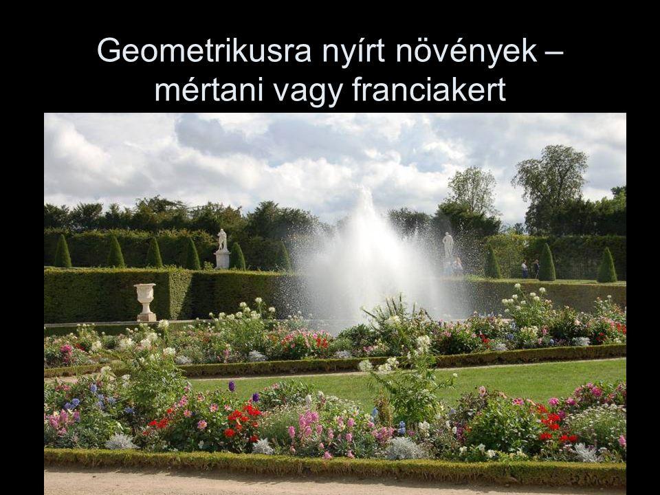 Geometrikusra nyírt növények – mértani vagy franciakert