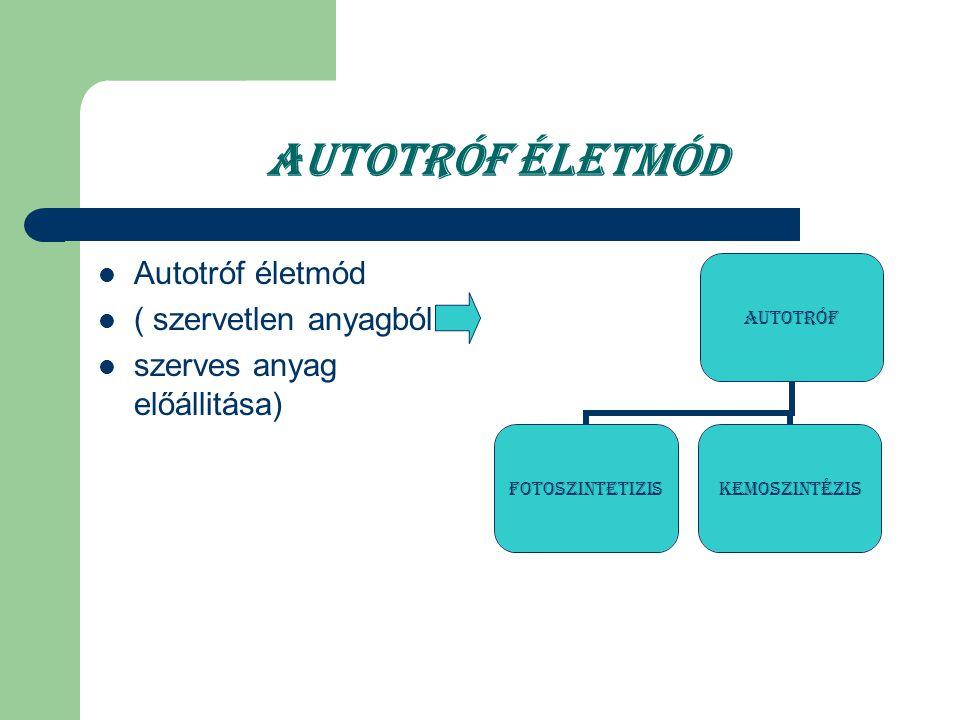 Autotróf életmód ( szervetlen anyagból szerves anyag előállitása) Autotróf fotoszintetiziskemoszintézis Autotróf életmód