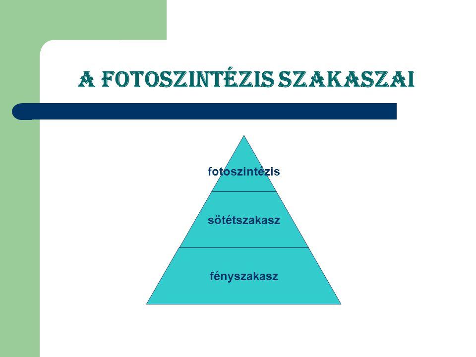 Definició A fotoszintézis során tehát a fényenergia átalakitásával nyert kémiai energia ( ATP) a szervetlen légköri CO2nek szerves anyaggá történő átalakitására használódik fel.