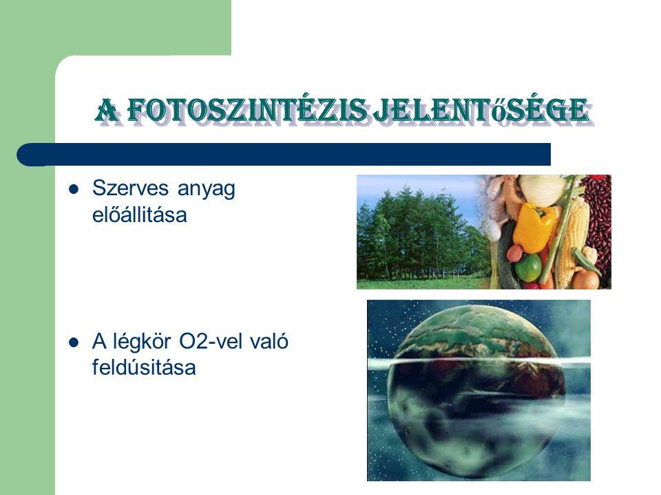 A fotoszintézis jelent ő sége Szerves anyag előállitása A légkör O2-vel való feldúsitása