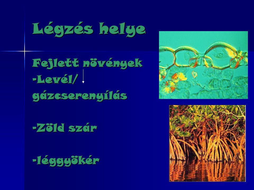 Légzés helye Fejlett növények -Levél/gázcserenyílás -Zöld szár -léggyökér