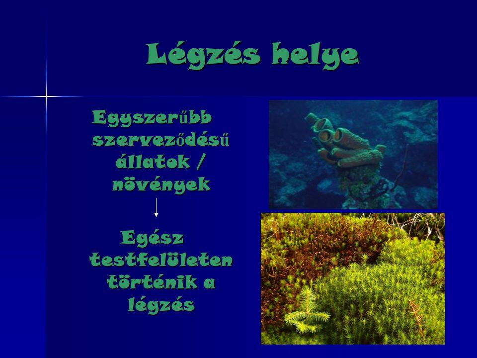 Légzés helye Egyszer ű bb szervez ő dés ű állatok / növények Egész testfelületen történik a légzés