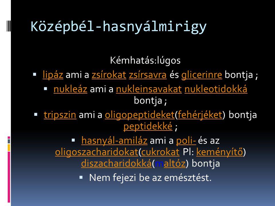 Középbél-hasnyálmirigy Kémhatás:lúgos  lipáz ami a zsírokat zsírsavra és glicerinre bontja ; lipázzsírokatzsírsavraglicerinre  nukleáz ami a nuklein