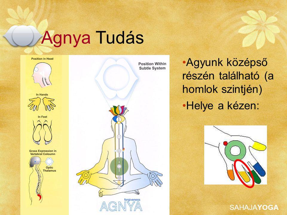 SAHAJAYOGA Agyunk középső részén található (a homlok szintjén) Helye a kézen: Agnya Tudás
