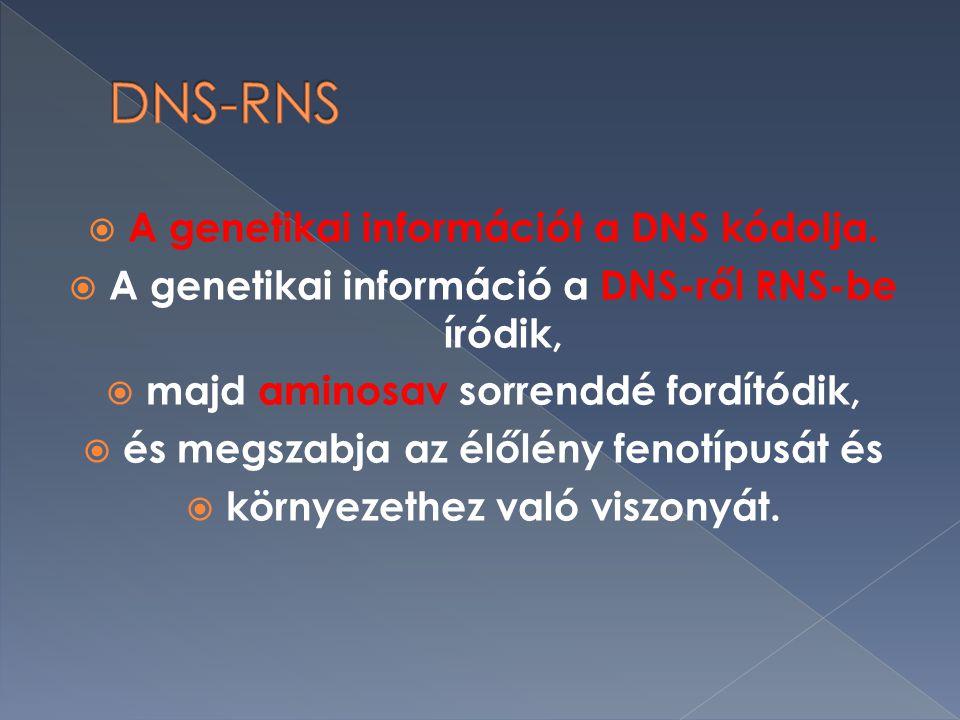  A genetikai információt a DNS kódolja.