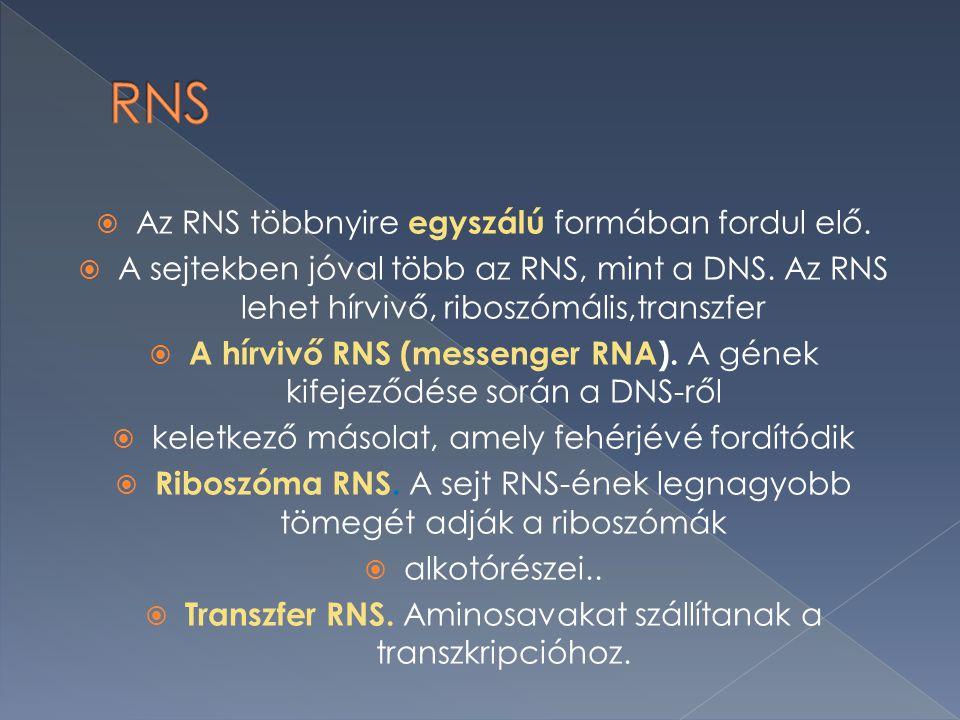 AAz RNS többnyire egyszálú formában fordul elő.AA sejtekben jóval több az RNS, mint a DNS.