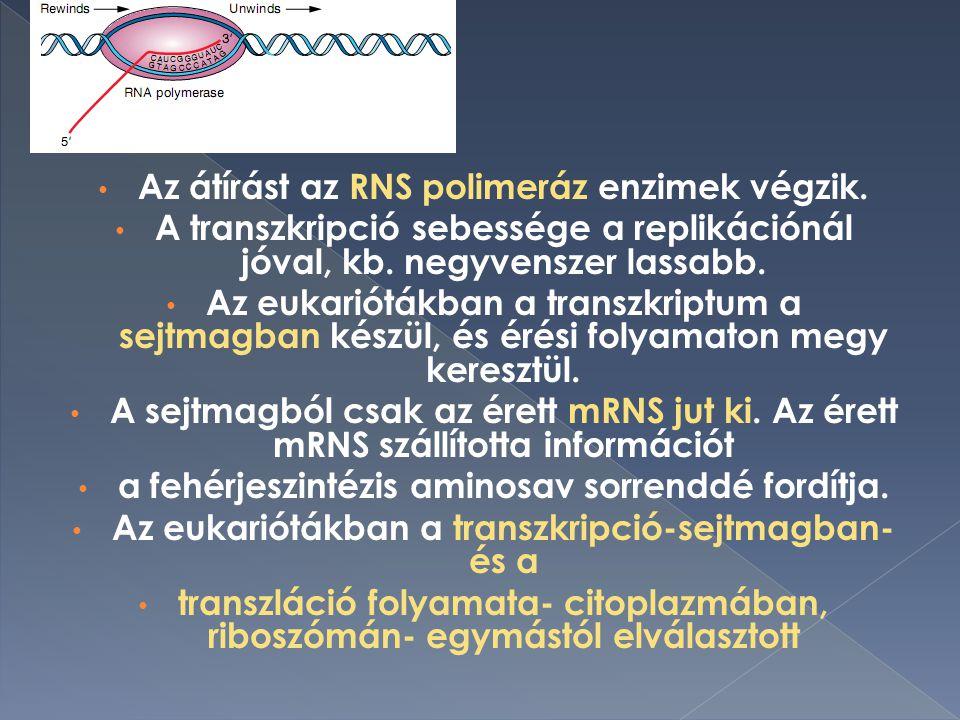Az átírást az RNS polimeráz enzimek végzik.A transzkripció sebessége a replikációnál jóval, kb.