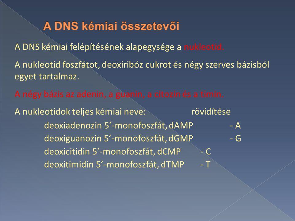 A DNS kémiai felépítésének alapegysége a nukleotid.