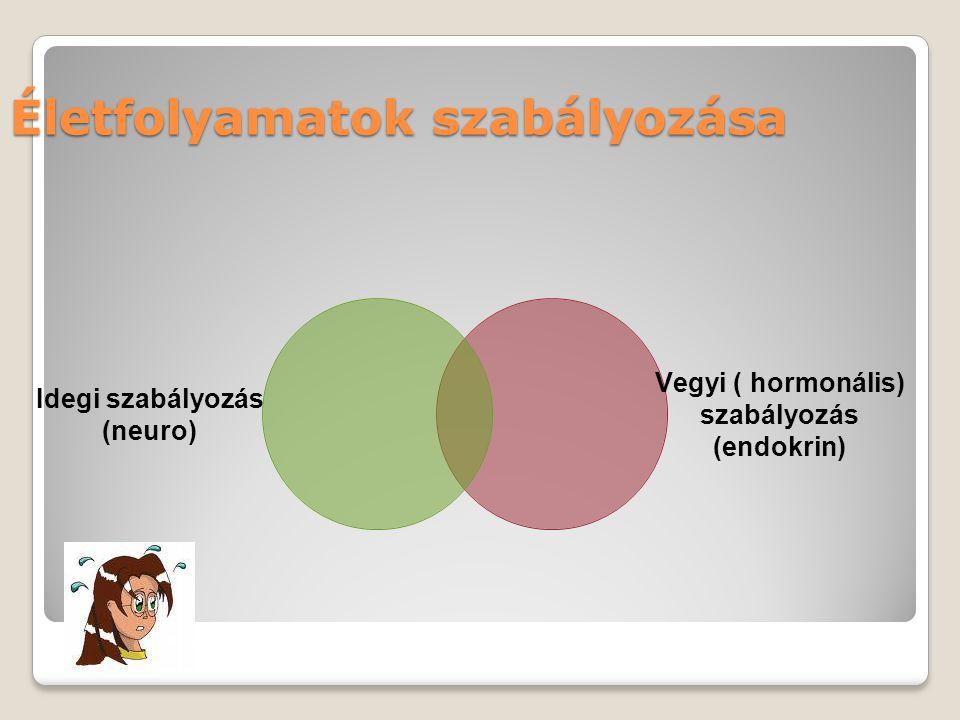 Idegi szabályozás (neuro) Vegyi ( hormonális) szabályozás (endokrin) Életfolyamatok szabályozása