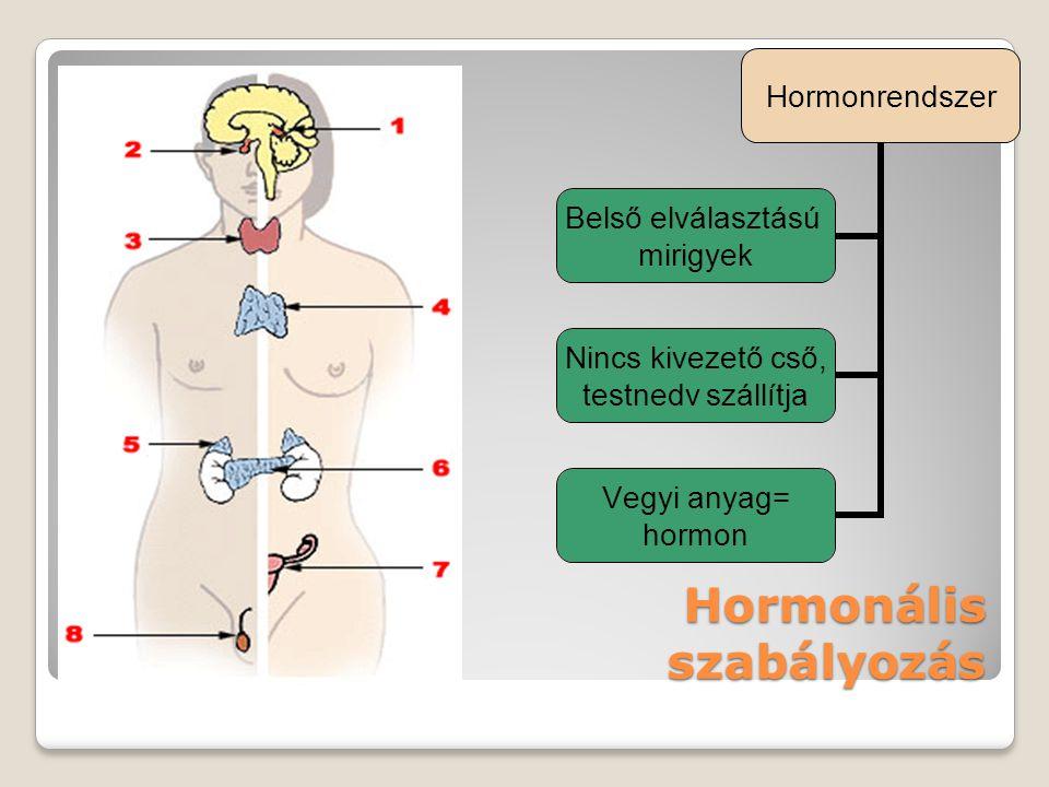 Hormonális szabályozás Hormonrendszer Belső elválasztású mirigyek Nincs kivezető cső, testnedv szállítja Vegyi anyag= hormon