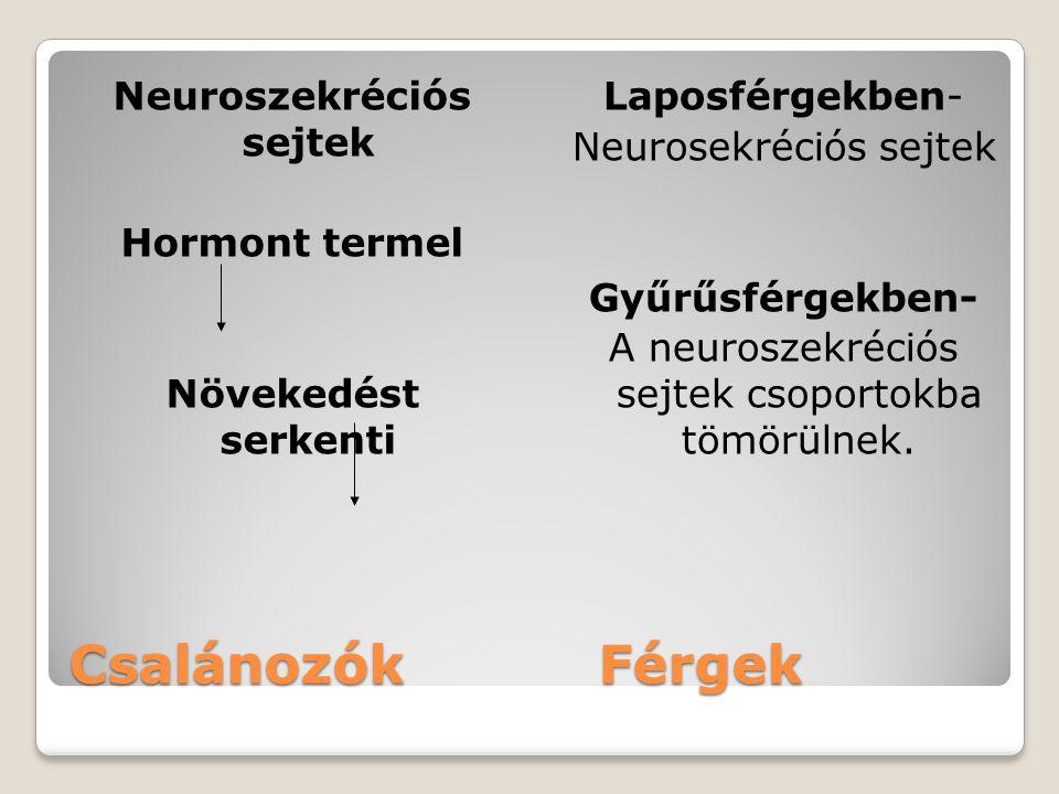 CsalánozókFérgek Neuroszekréciós sejtek Hormont termel Növekedést serkenti Laposférgekben- Neurosekréciós sejtek Gyűrűsférgekben- A neuroszekréciós se