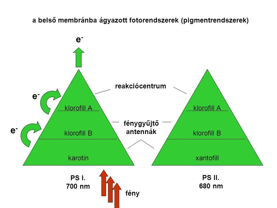 a belső membránba ágyazott fotorendszerek (pigmentrendszerek) klorofill A klorofill B karotin klorofill A klorofill B xantofill PS I. 700 nm PS II. 68