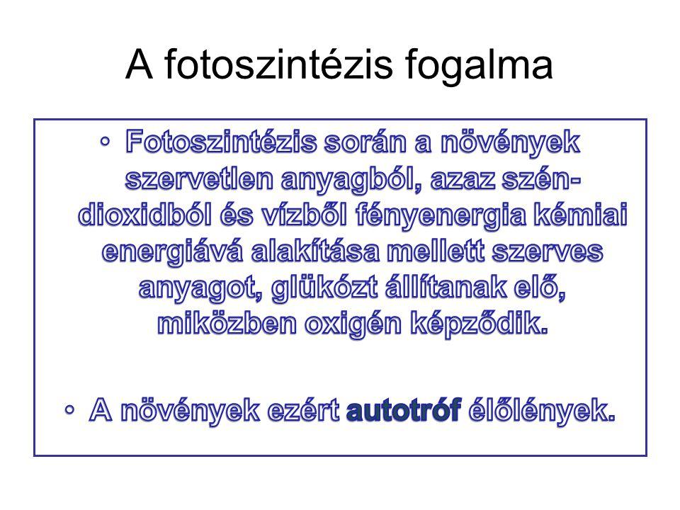 A fotoszintézis fogalma