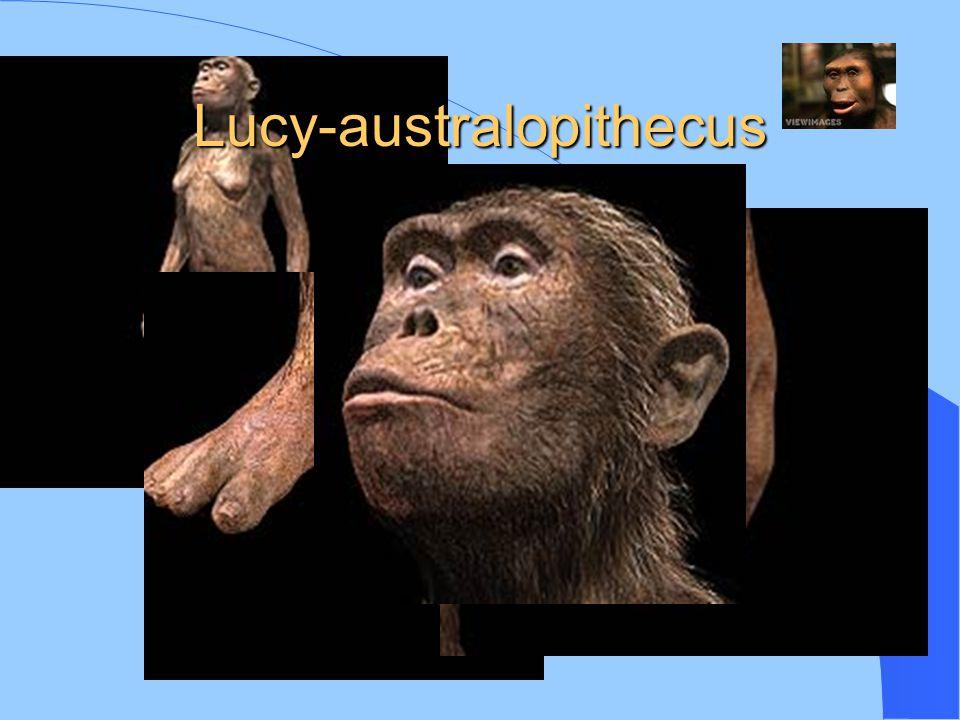 Lucy-australopithecus