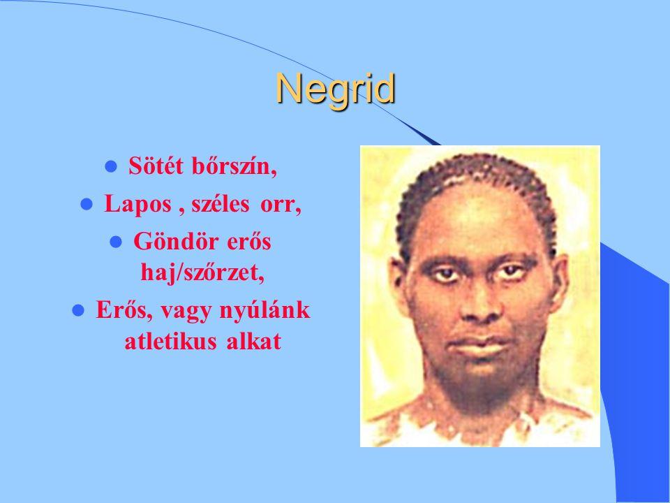 Rasszok Emberfajták (nagyrasszok), nyelvek, vallások Az egész emberiség egy fajhoz tartozik (Homo sapiens).