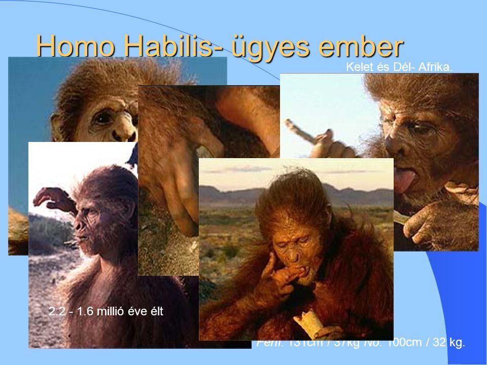 """Homo Erectus- """"felegyenesedett ember ;"""