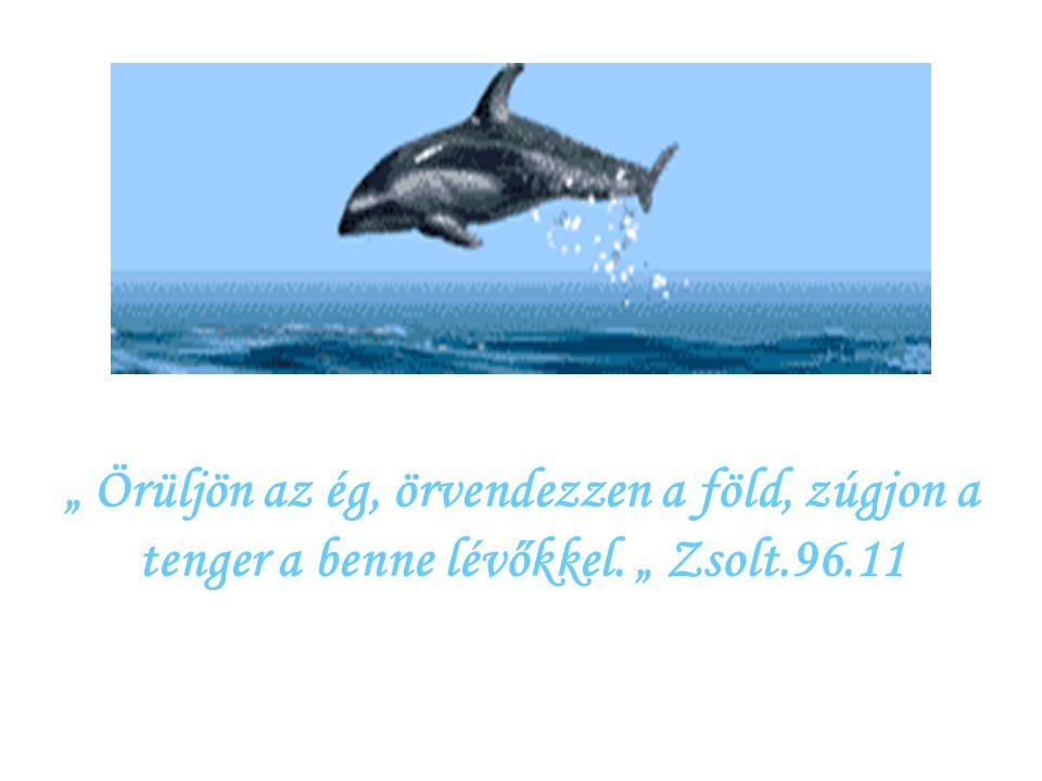 """"""" Ahogyan a szarvas kívánkozik a folyóvízhez, úgy kívánkozik a lelkem hozzád, Istenem ! """" Zsolt. 42.2"""