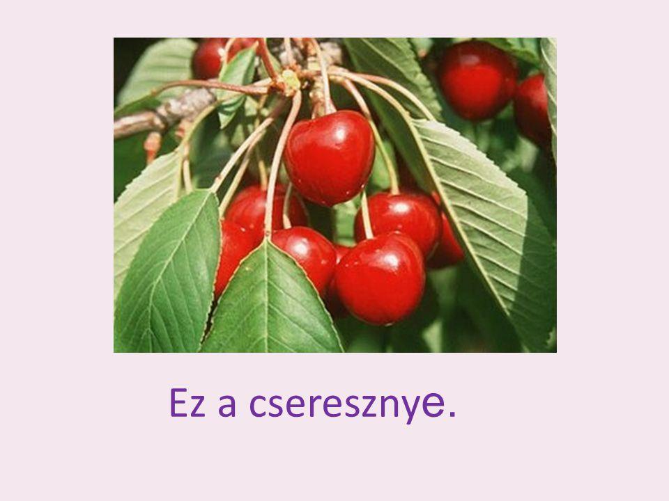 Ez a csereszny e.