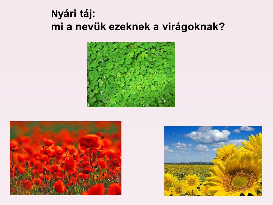 N yári táj: mi a nevük ezeknek a virágoknak?