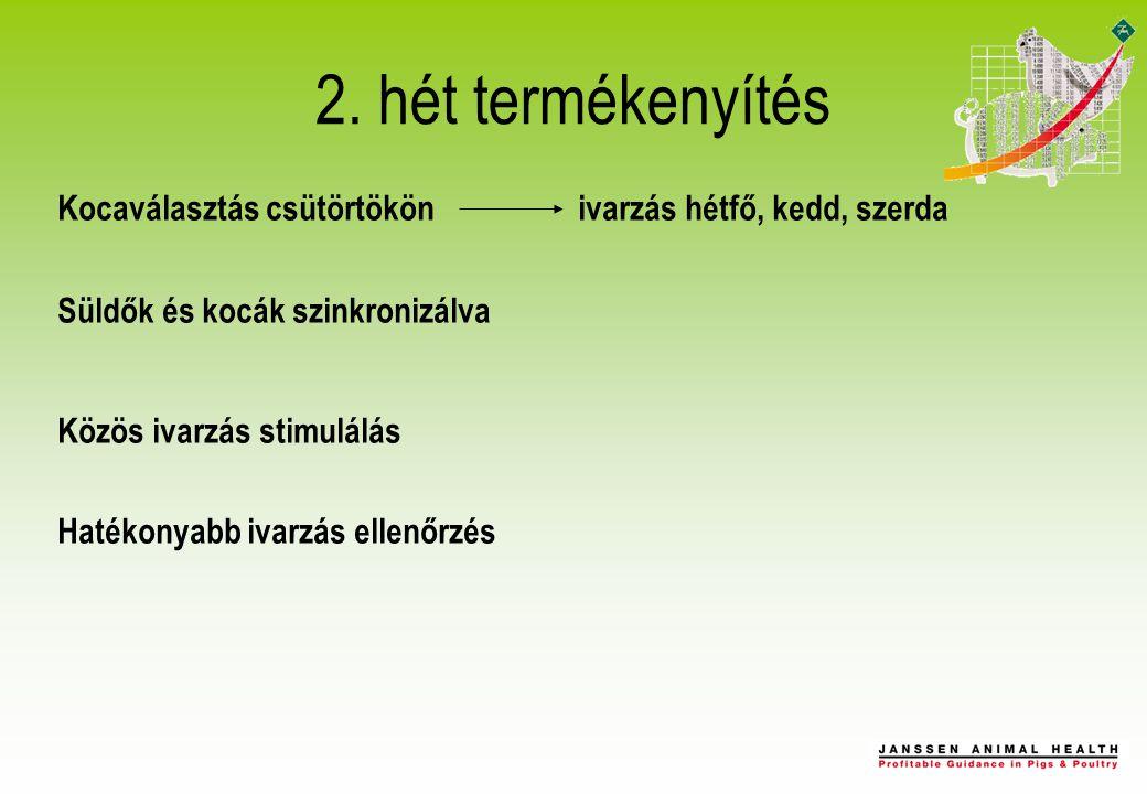 2. hét termékenyítés Kocaválasztás csütörtökön ivarzás hétfő, kedd, szerda Süldők és kocák szinkronizálva Közös ivarzás stimulálás Hatékonyabb ivarzás