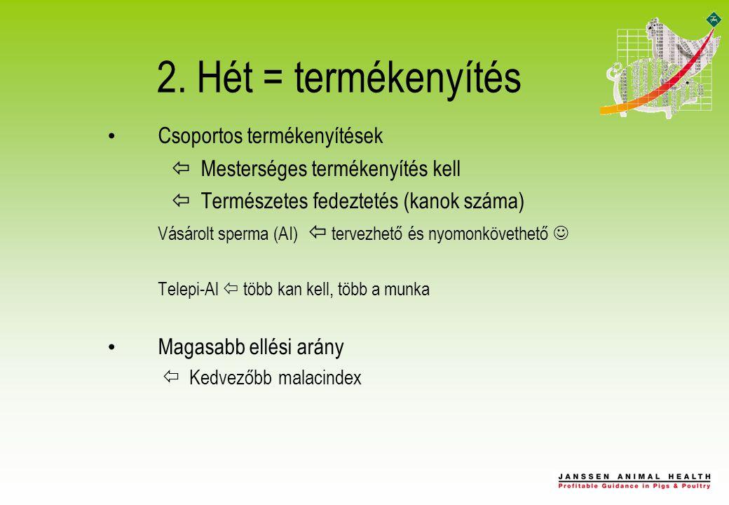 2. Hét = termékenyítés Csoportos termékenyítések  Mesterséges termékenyítés kell  Természetes fedeztetés (kanok száma) Vásárolt sperma (AI)  tervez