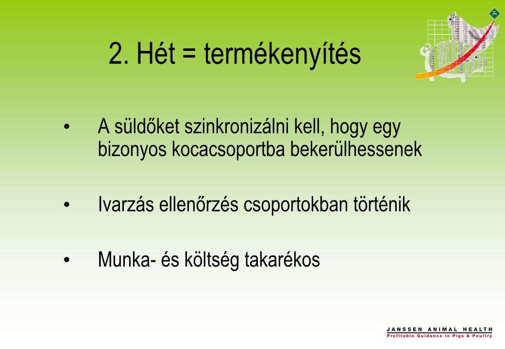 2. Hét = termékenyítés A süldőket szinkronizálni kell, hogy egy bizonyos kocacsoportba bekerülhessenek Ivarzás ellenőrzés csoportokban történik Munka-